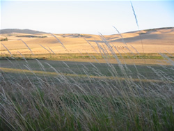 Paradise Ridge & The Palouse Praire